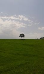 Baum auf Weide, Allgäu