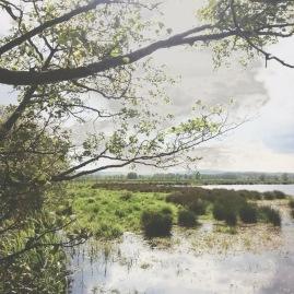 Steinhuder Meer mit Naturschutzgebiet für Vögel